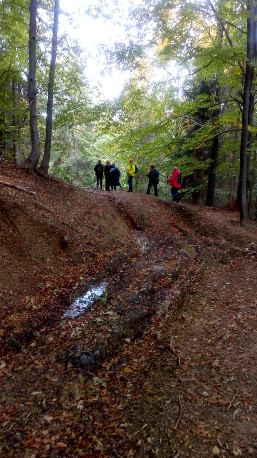 Sekcja Turystyka Piesza na trasie Cięcina Górna – Bystra Górna – 07.10.20r, prowadzi przewodnik beskidzki Bogusia Dziergas